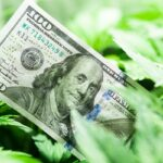 The economy of hemp industry. Tax on weed. Money and pot. Cannabis finance. Revenues in the marijuana industry and the medical industry. American dollar bill on cannabis leaves. Taxation and marijuana.